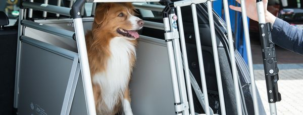 Grosse Sicherheit bietet die Hundebox aus Metall | Ruchstuck-Garage AG